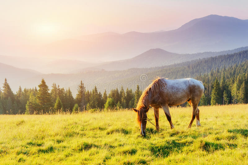Riding in the mountains at sunset. Carpathians. Ukraine. Europe royalty free stock image