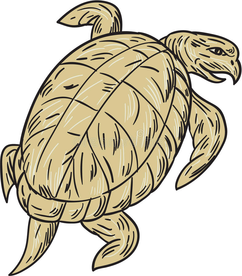 Ridley Turtle Drawing stock illustrationer
