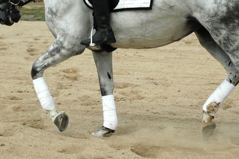 Ridng del caballo fotos de archivo