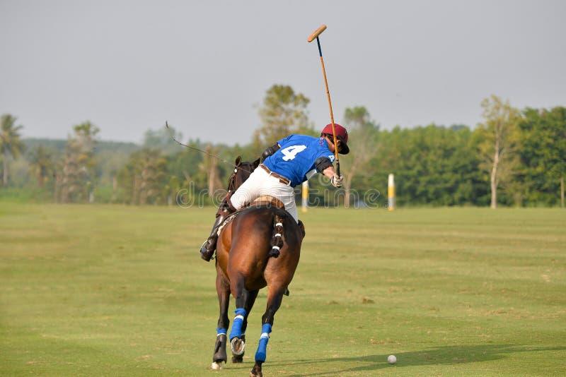 Ridning för hästpolospelare som slår en boll royaltyfri fotografi