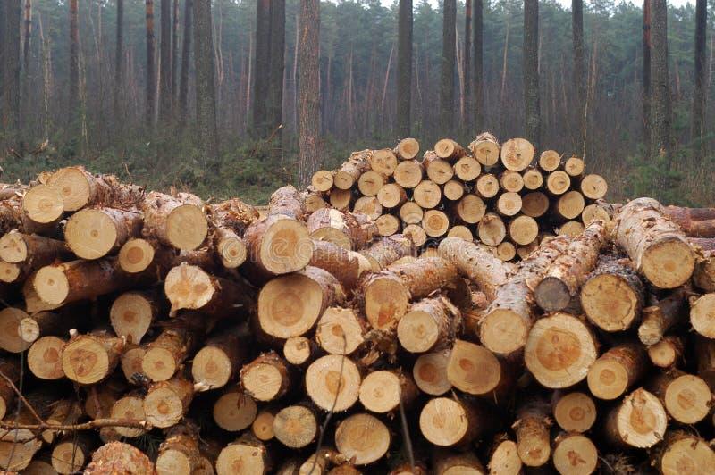 Riduca gli alberi fotografia stock