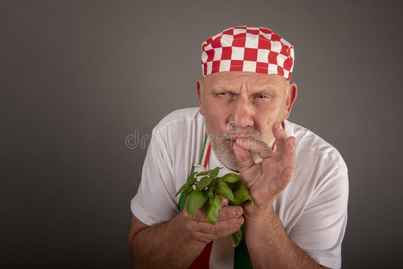Riechende Basilikumblätter des reifen italienischen Chefs stockfotografie