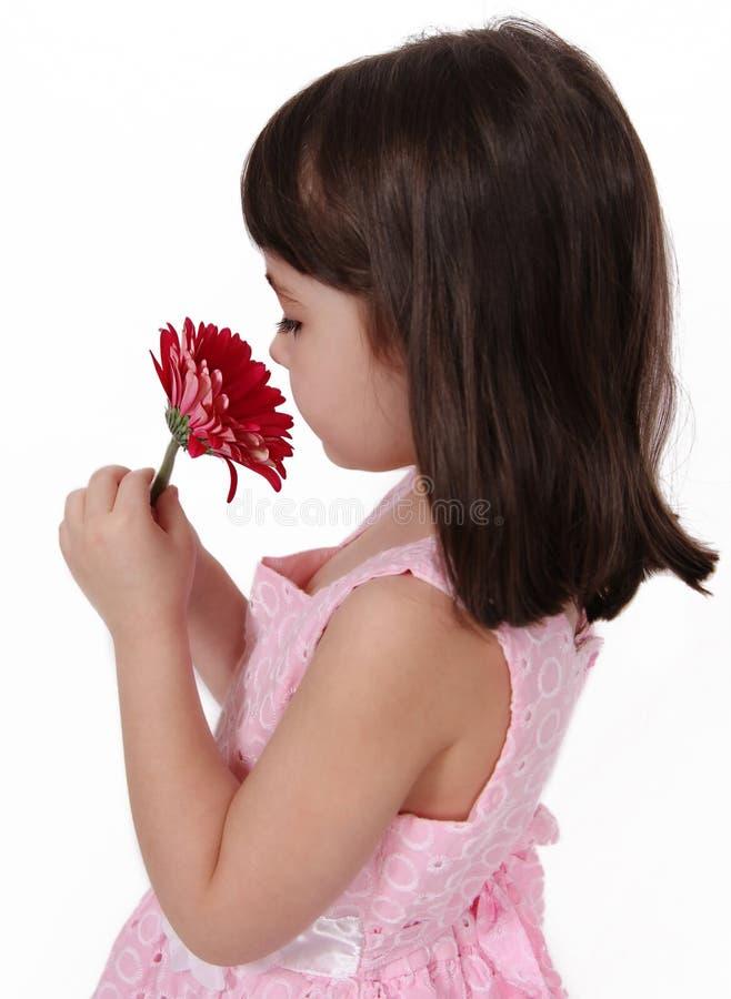 Riechende Blume des süßen Mädchens. getrennt stockfoto