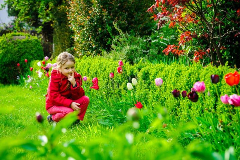 Riechende Tulpen des kleinen Mädchens im Garten stockfoto