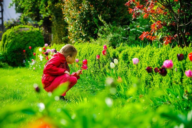 Riechende Tulpen des kleinen Mädchens im Garten stockbilder