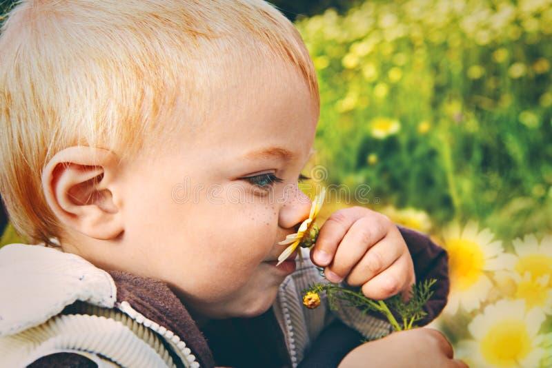Riechendes Gänseblümchen des kleinen Schätzchens lizenzfreie stockfotos