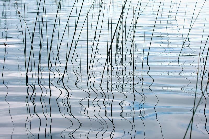 Riegue el fondo con las plantas costeras y la reflexión ondulada imagen de archivo