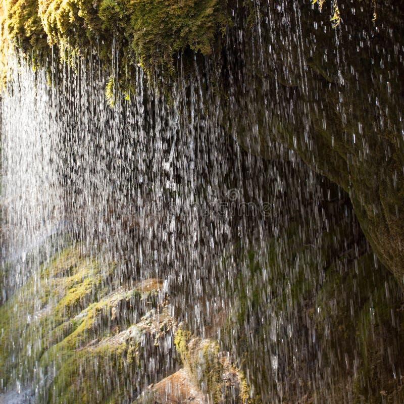 Riegue la caída de musgo en el bosque negro, Alemania fotografía de archivo libre de regalías