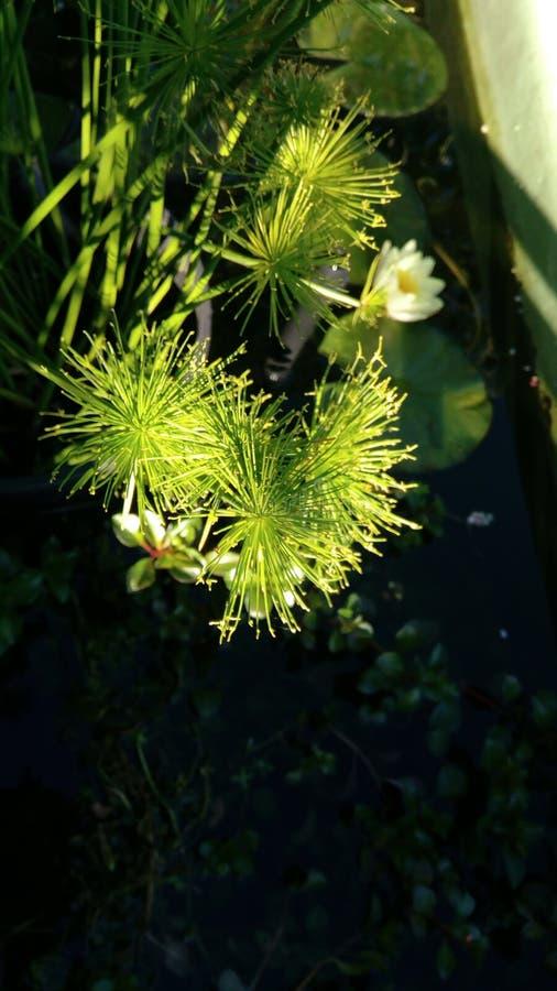 Riegue la flor foto de archivo libre de regalías