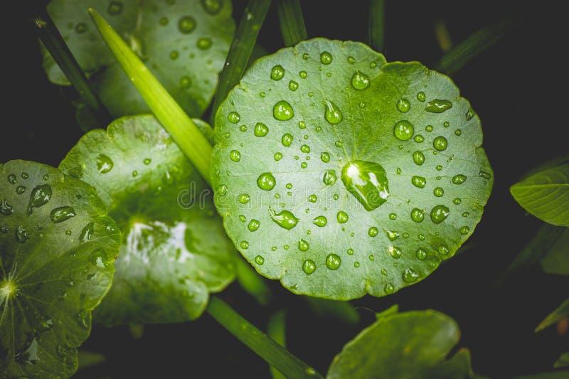 Riegue los descensos y las hojas se cierran para arriba para el fondo de la naturaleza fotografía de archivo