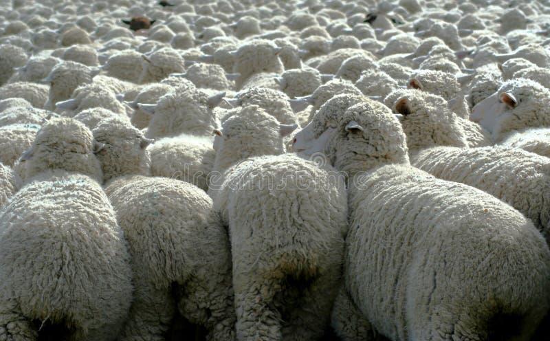 Rien mais laines 3 photo stock