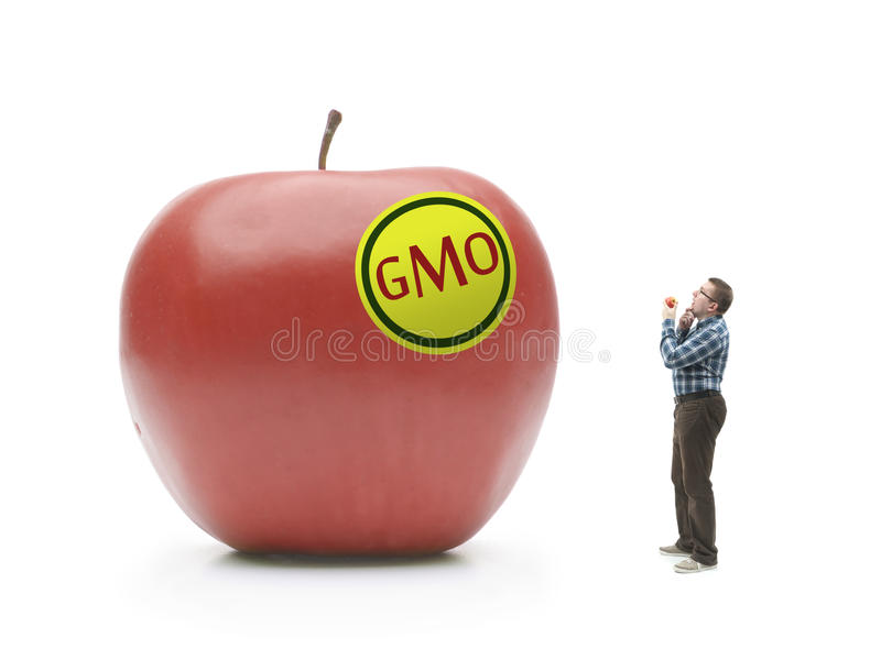 Riese GMO-Apfel stockbild