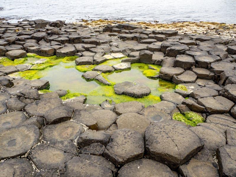 Riesen 's Kauseweg mit Barnacles und Algen stockfotografie