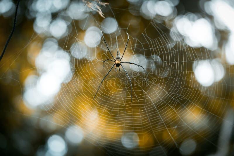 Riesige goldene KugelWeb spider Nephila-pilipes lizenzfreies stockbild