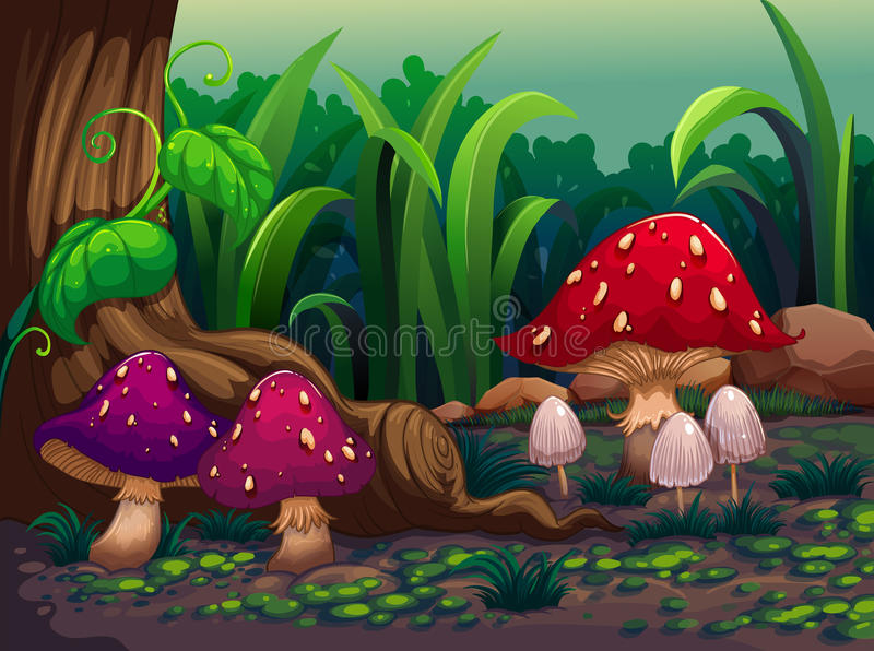 Riesige Pilze im Wald vektor abbildung