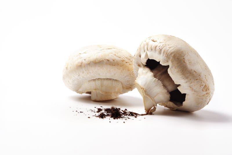 Riesige Pilze und Boden stockbild