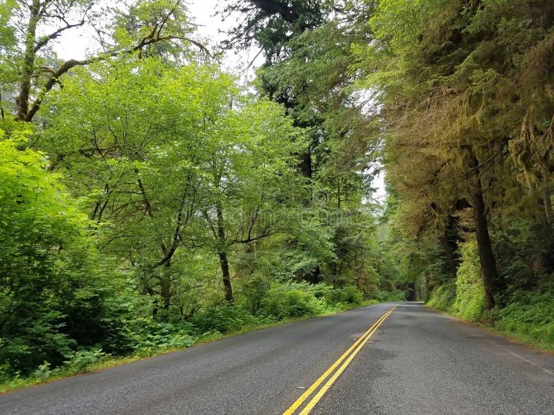 Riesige Rotholz-Bäume entlang der Allee des Giants lizenzfreie stockbilder