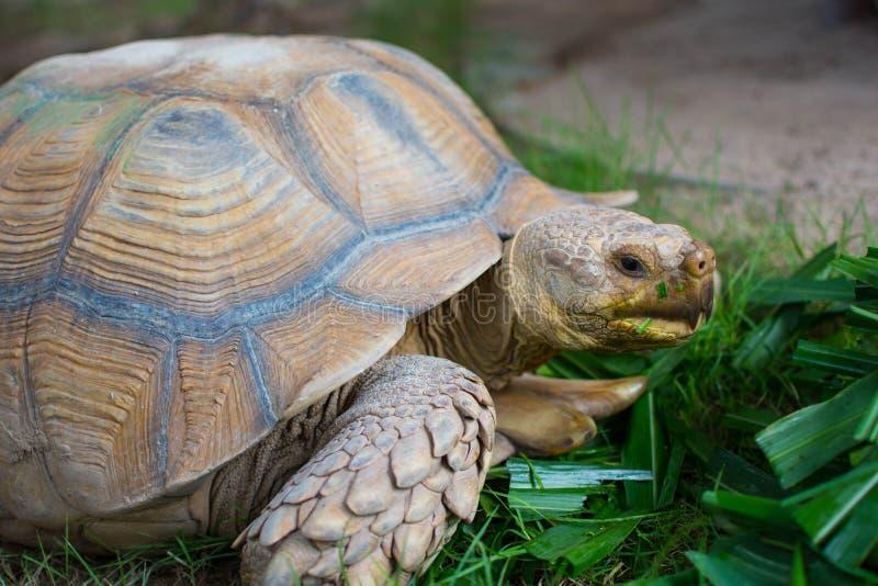Riesige Schildkröte lizenzfreie stockfotos
