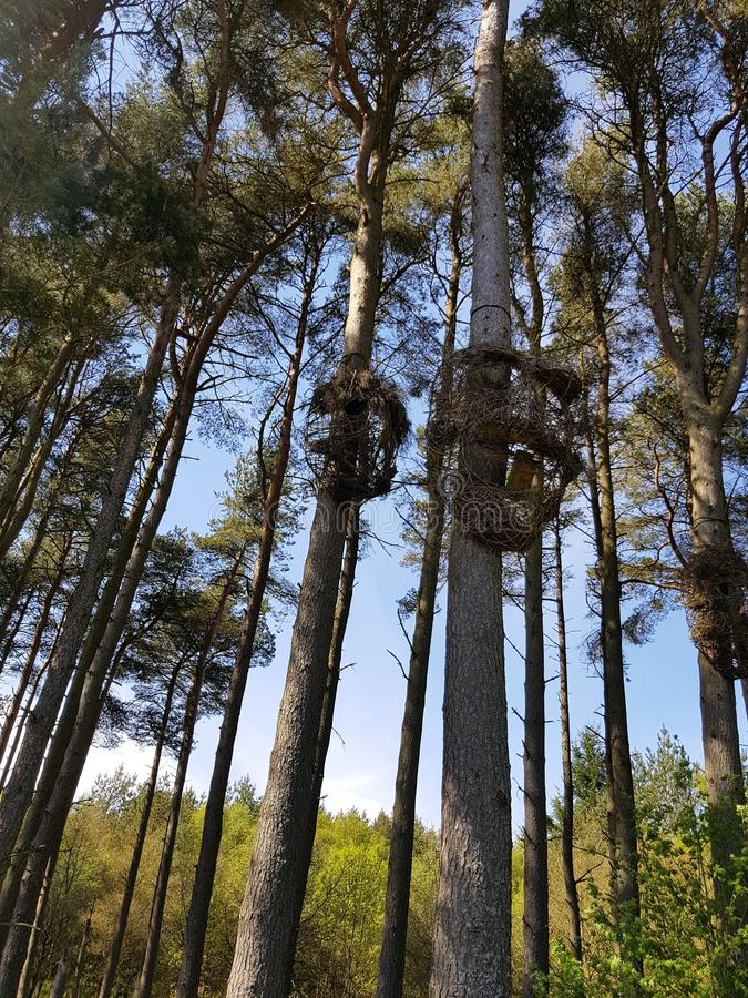 Riesige Skulpturen in den Waldbäumen lizenzfreie stockfotos