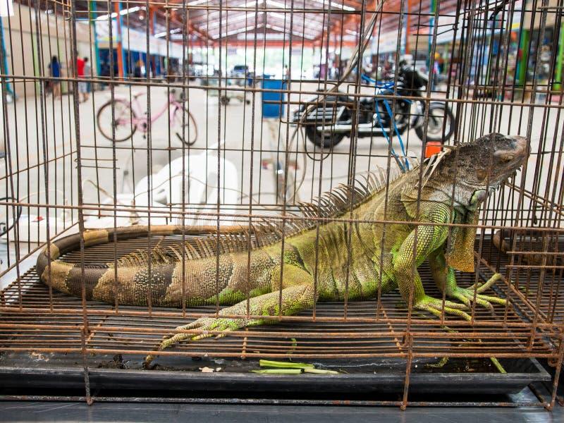 Riesiger Leguan Gila in einem anomal Markt des Käfigs stockfotografie