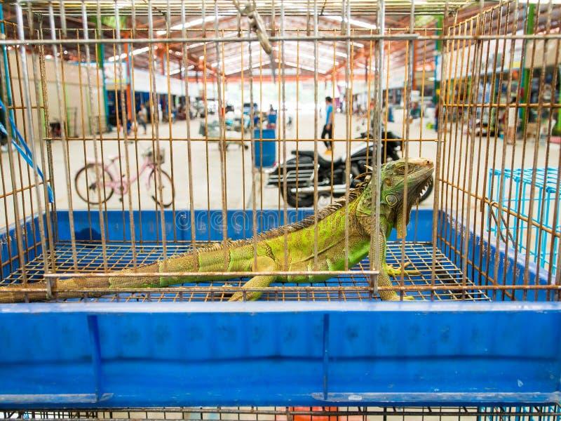 Riesiger Leguan Gila in einem anomal Markt des Käfigs lizenzfreie stockfotografie