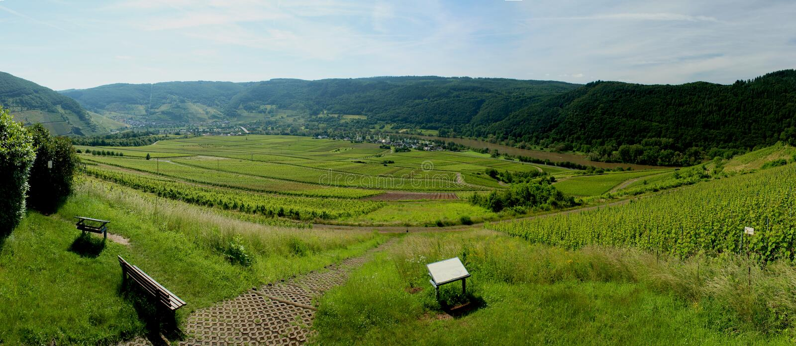 Riesling Vineyard on Mosel Trier, Germany royalty free stock photo