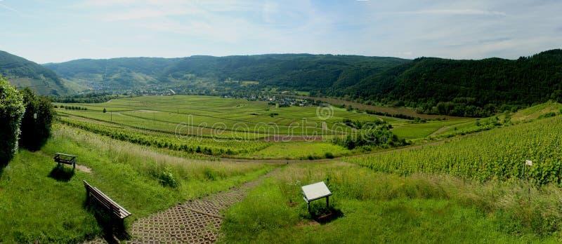 Riesling winnica na Mosel odważniaku, Niemcy zdjęcie royalty free