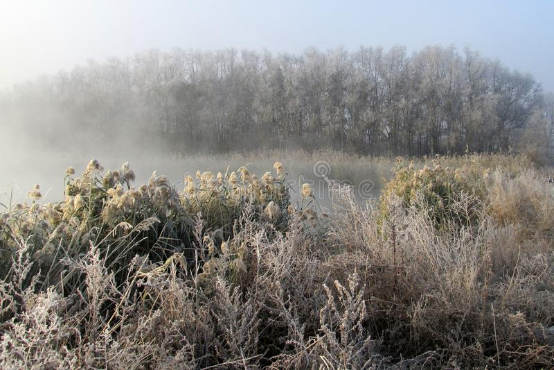Riet in de geheimzinnige ochtendmist over de waterspiegel van de rivier in de vroege ochtend stock foto