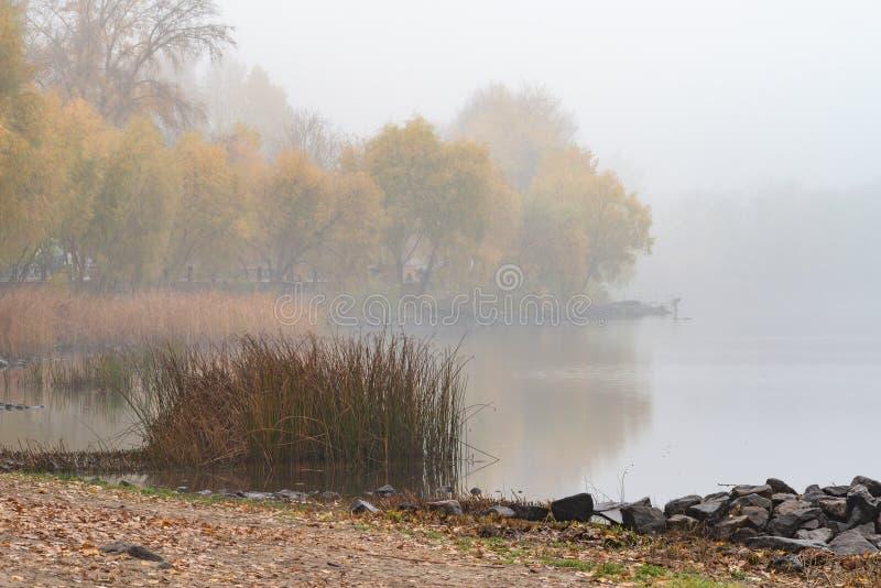 Riet en bomen dicht bij de Dnieper-rivier in Kiev, de Oekraïne Een zachte de herfstochtend, mist over het koude en kalme water royalty-vrije stock fotografie