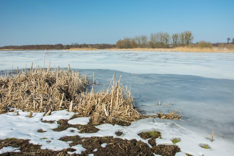 Riet en sneeuw op de kust van een bevroren meer Horizon en blauwe hemel stock afbeelding