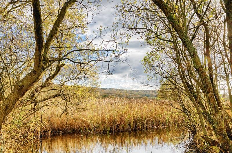 Riet en vijver in Leighton Moss, Lancashire stock foto