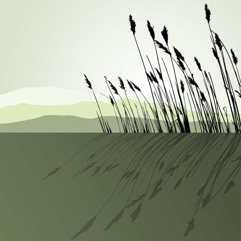 Riet in het water - vector stock illustratie