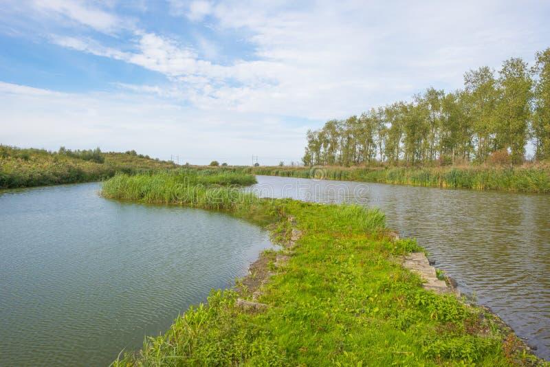 Riet langs een weg in een meer in een natuurreservaat bij daling stock afbeelding