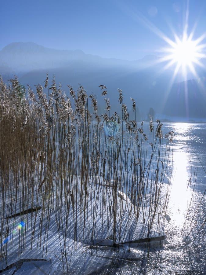 Riet met ijs op Kochelsee in de Winter, Beieren Duitsland royalty-vrije stock foto