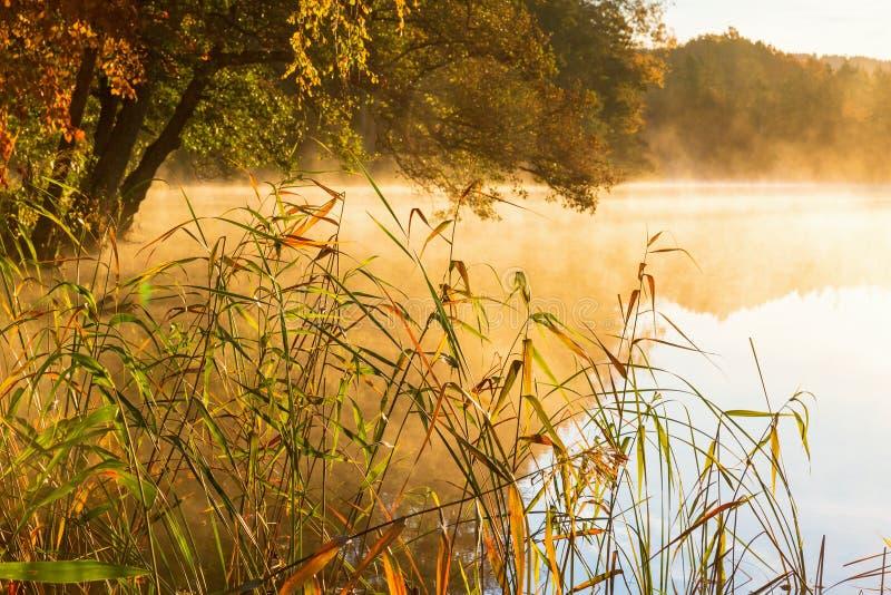 Riet op het strand en mist op het meer bij zonsopgang stock afbeelding