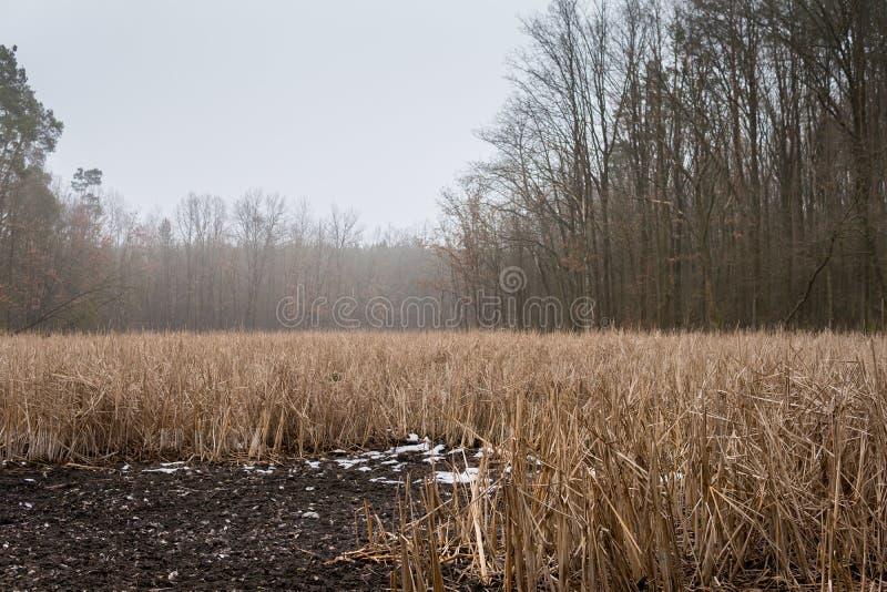 Riet voor bos stock foto's