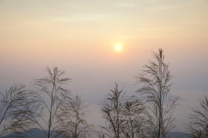 Riet of weiden tegen mooie zonsopgang met achtergrond van mor royalty-vrije stock fotografie
