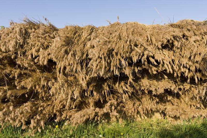 Rietbalen, Reed Bales photo stock