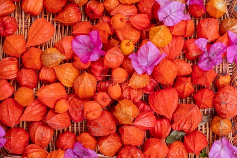 Rieten rieten mand met verse gekleurde rode oranje roze roze bloemen van Bouganvillea en Physalis in de tuin ter plaatse stock afbeelding
