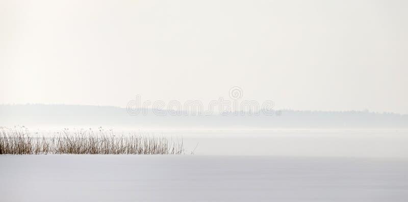 Rietpunt in een bevroren meer met sneeuw en een mistige horizon stock afbeelding