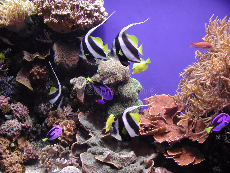 Riff-Fische und Korallen lizenzfreies stockbild