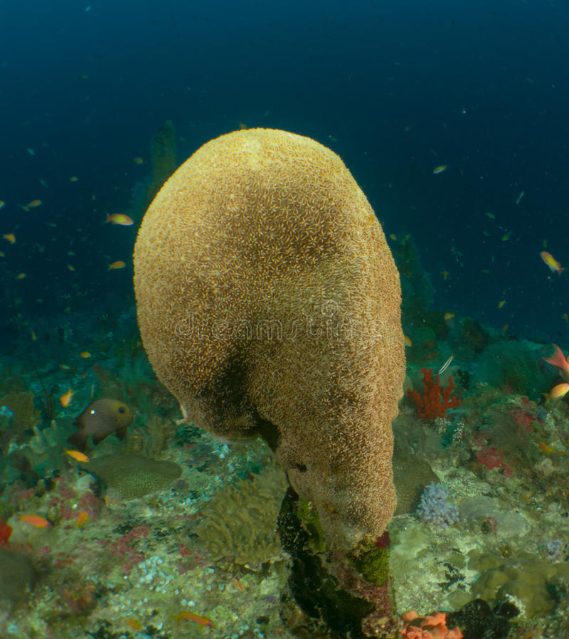 Riff und Koralle Malediven lizenzfreies stockbild