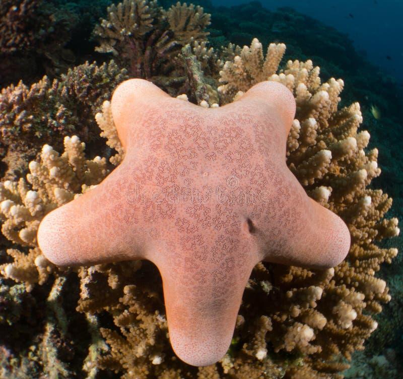 Riff und Koralle Malediven lizenzfreie stockbilder