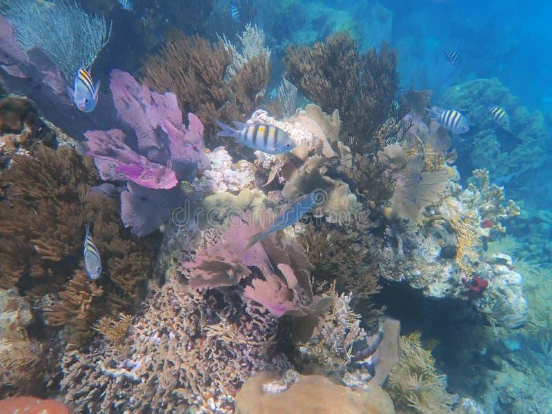 Rifflandschaft mit Korallen, Fischen und Oberteilen stockbilder