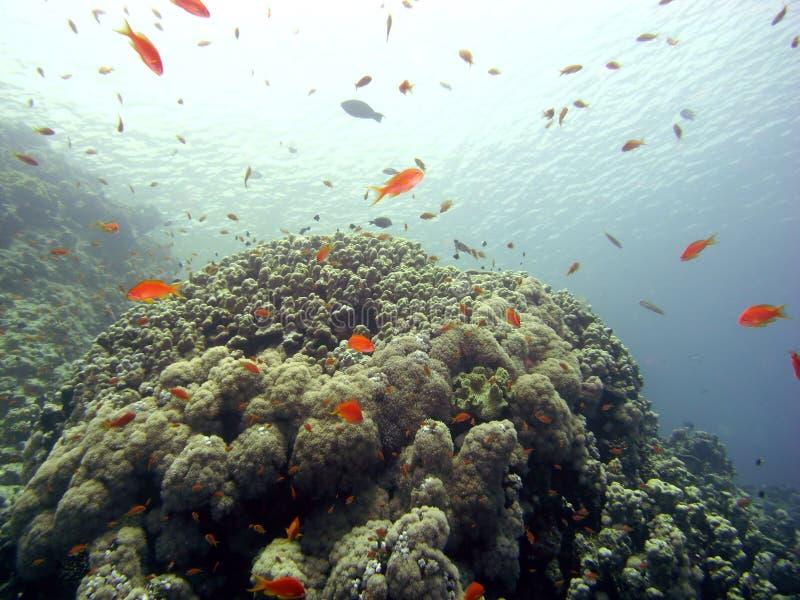 Riffszene mit Koralle und Fischen stockbilder