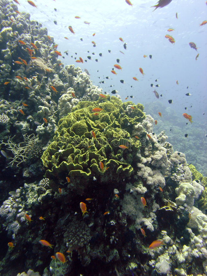 Riffszene mit Koralle und Fischen lizenzfreie stockfotos