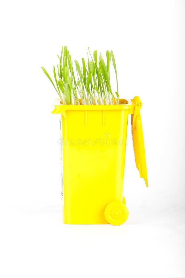 Rifiuti di plastica gialli che riciclano ecologia del contenitore, grano verde immagine stock libera da diritti