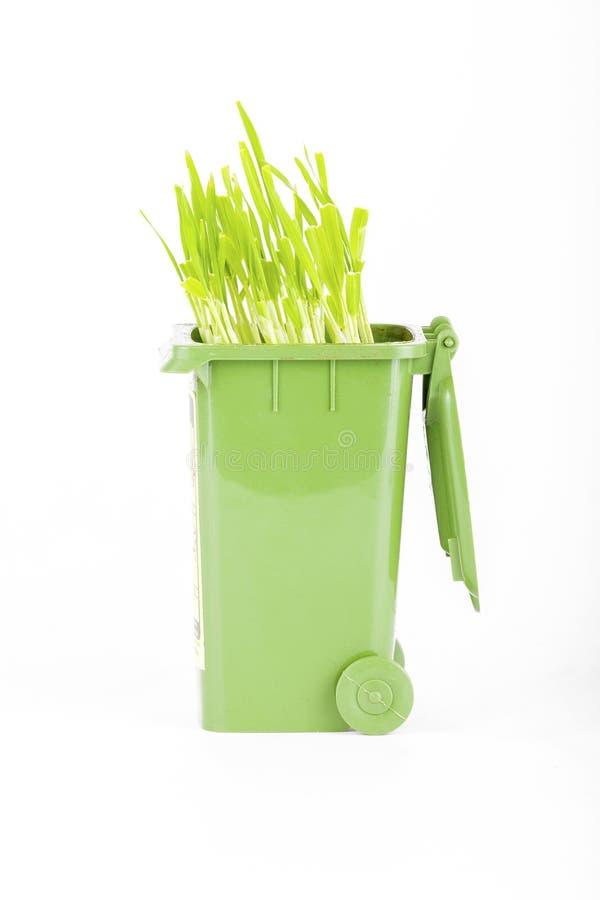 Rifiuti di plastica verdi che riciclano ecologia del contenitore, grano verde fotografia stock libera da diritti
