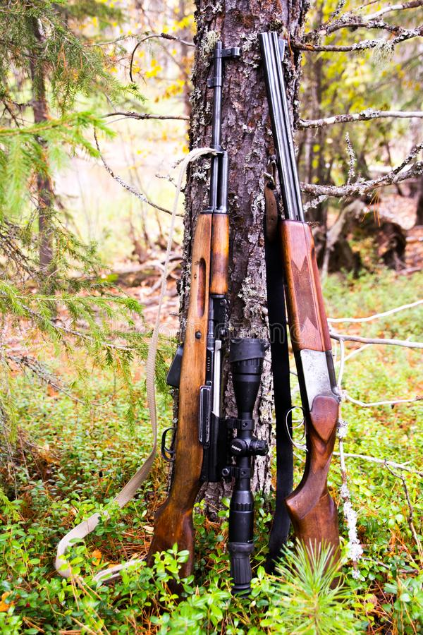 The rifles near tree close up. Yamal. Arctic nature. Forest royalty free stock photos