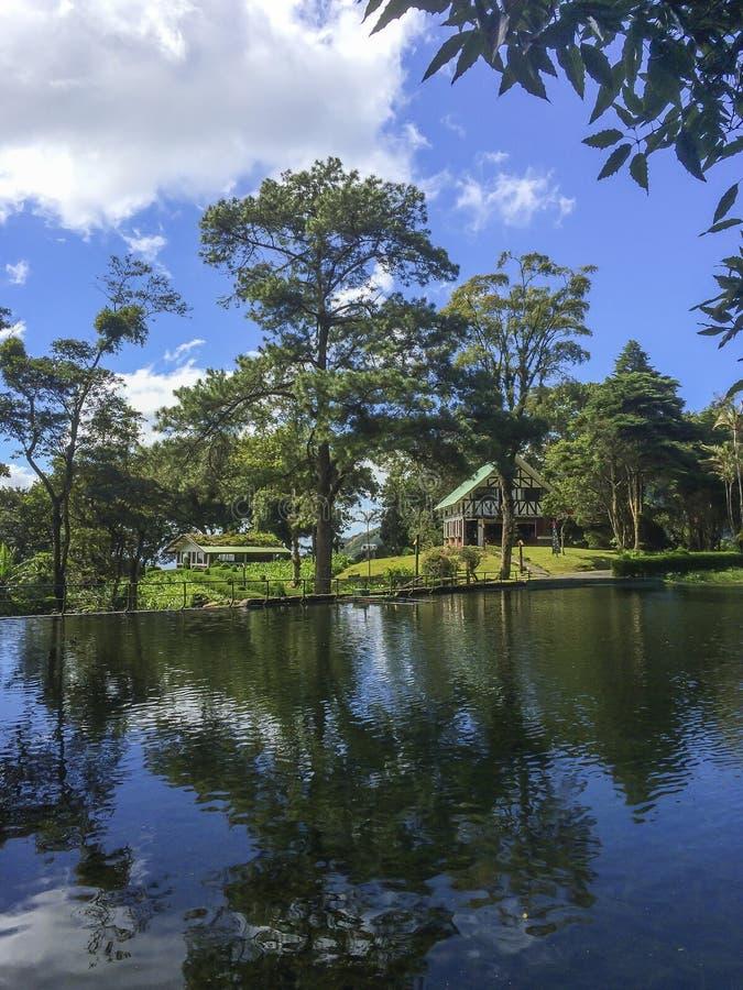 Riflessione alla montagna di Selva Negra, Matagalpa dell'acqua dell'albero fotografie stock libere da diritti